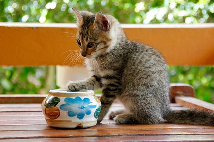 7 Merk Makanan Kucing Terpopuler di Indonesia