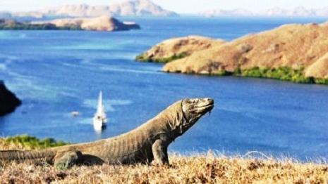 Pulau Komodo, Nusa Tenggara Timur