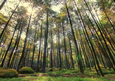 Hutan Raya